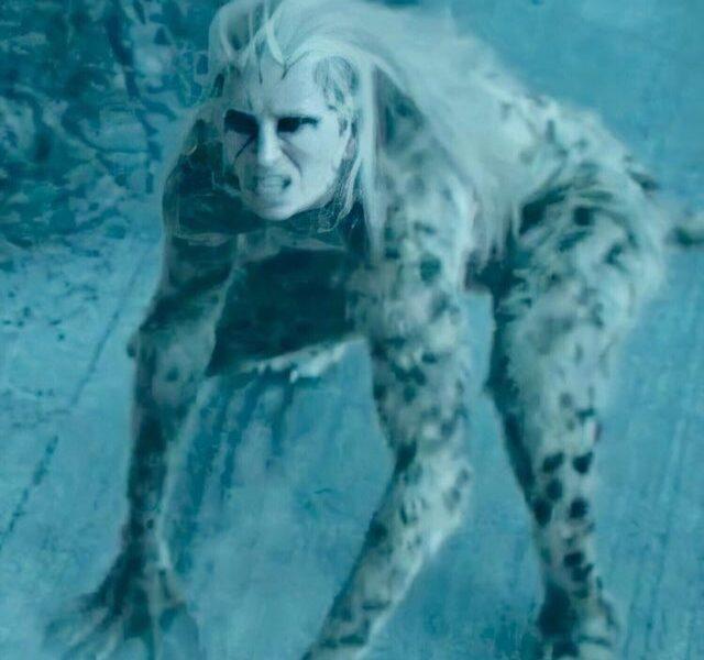 cheetah-2-ww84-640x600.jpg